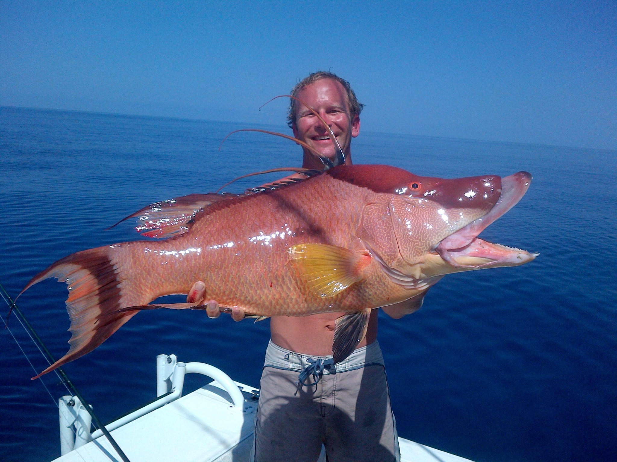 Bringing home the bacon! Monster Hogfish nabbed by Jason ...