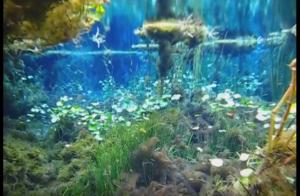 Florida's real life AVATAR aquascape!