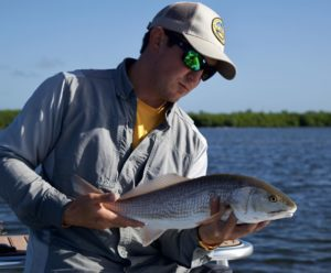 A fine Tampa Bay redfish caught while stalking fish yesterday with @flatsclasstv…