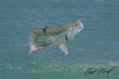 pat-ford-tarpon-fishing-skiff-life-016