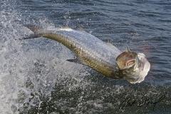 pat-ford-tarpon-fishing-skiff-life-07