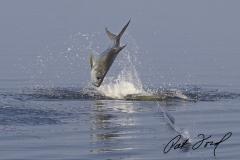 pat-ford-tarpon-fishing-skiff-life-09