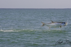 pat-ford-tarpon-fishing-skiff-life-10