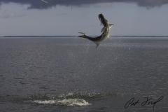 pat-ford-tarpon-fishing-skiff-life-11