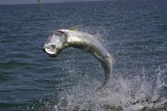 pat-ford-tarpon-fishing-skiff-life-13
