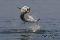 pat-ford-tarpon-fishing-skiff-life-15