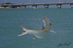 pat-ford-tarpon-fishing-skiff-life-16