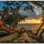 "Amazing Capture, ""Sunset Tree"" by Armondo's Photos"