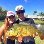 Peacock Bass Madness in Plantation, FL