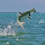 Amazing capture while Tarpon Fishing by Pat Ford.