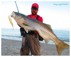 Roy Leyva and Shimano are hitting the Striper with Sore Lips!