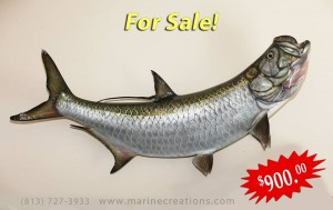 Amazing detail on this Tarpon Mount by Marine Creations Taxidermy!