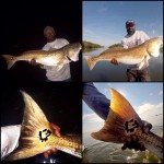 Mike Goodwine is Running with the BULL redfish, TWICE!!