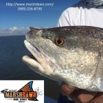 Rhino Redfish in Louisiana