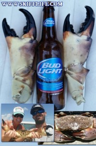 Monster Stone Crabs in the Florida Keys