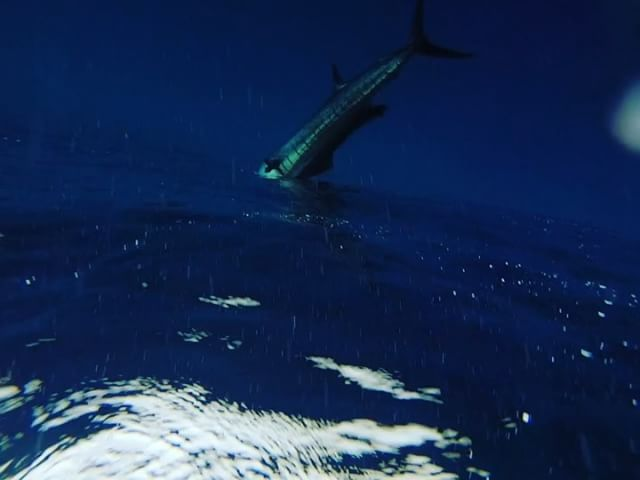 Soul of Big Bite #sailfish #fishing #bestfishingfails #infinitystructure #shiman...