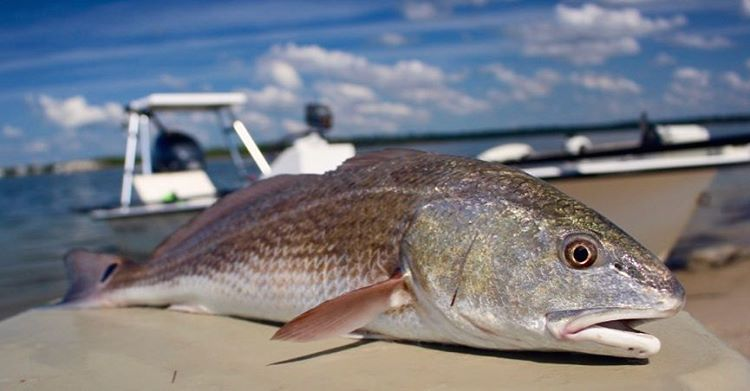 The incoming front had the slot reds chewing yesterday. #redfish #drumspots #mit...