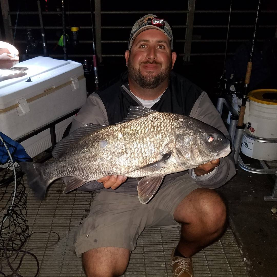 A blacky from last night!  #blackdrum #drum #inshore #shimano #penn #pierlife #p...