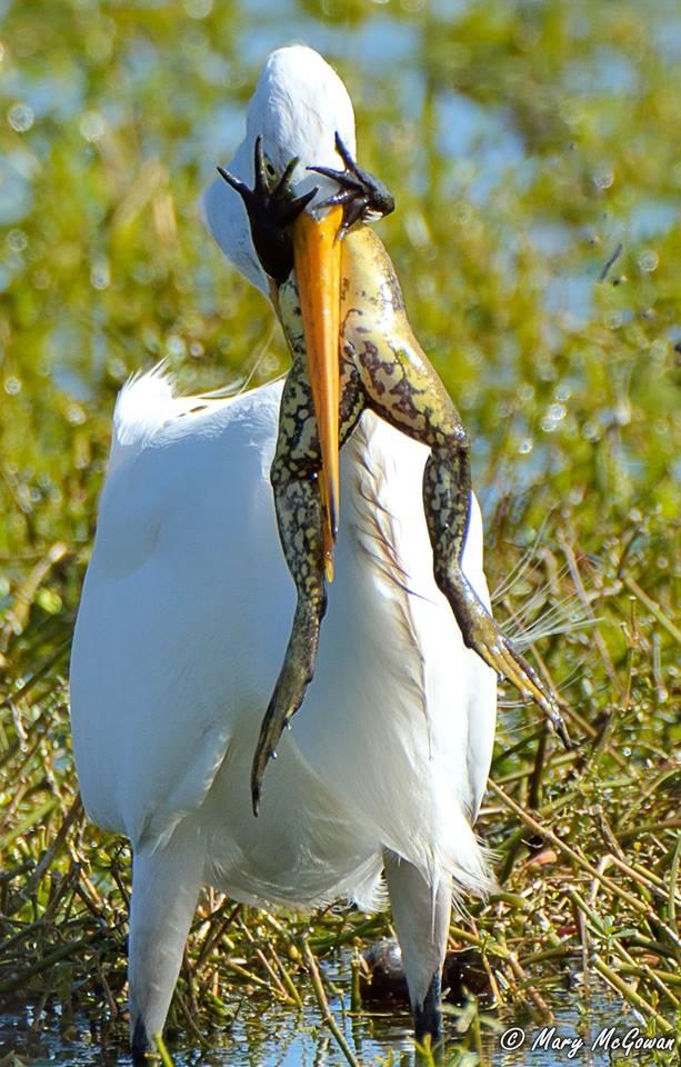 egret-baits