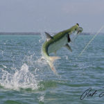 tarpon fishing skifflife pat ford