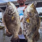 Tripletail Madness, Living the Skiff Life with Southern Salinity