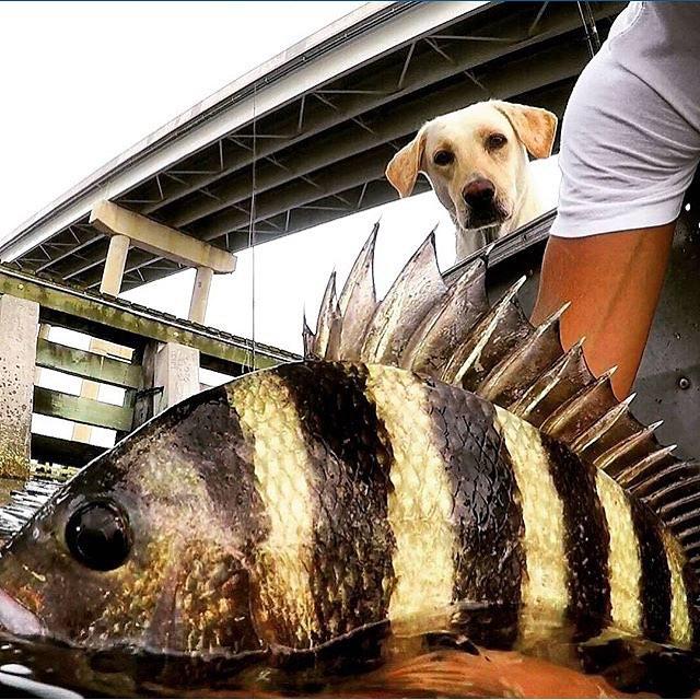 Carolina Rig to catch Saltwater Fish