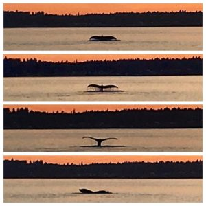 A sequence of last night's magic …..