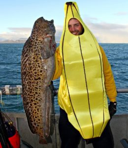 Bring the bananas on board !!  Full story from the Artic species-hunting trip on…