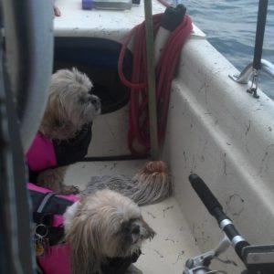 Sassy and Ellie Mae, the girls fishing     …