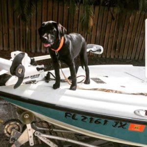 """Meet my pup basher EL skiff """"aquahound""""                              …"""