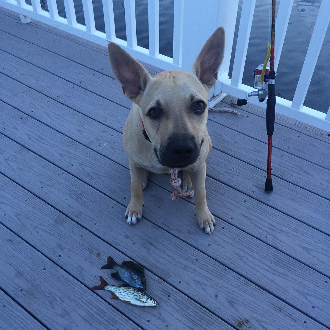 Carolina Skiff - Looks like Scoobart likes fishing too!   ...