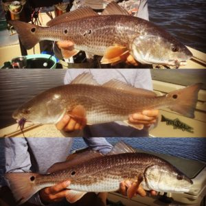 If you have never fished for these fish, I would highly suggest that you change …