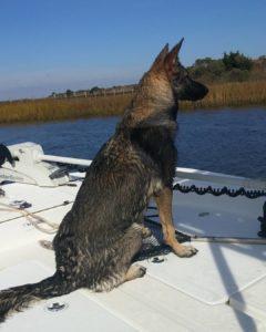 Carolina Skiff – Focused on that topwater lure Dad is casting & retrieving…                  …