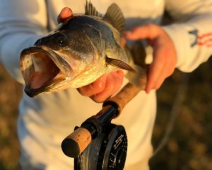 Bass and fly reels . . . .  …