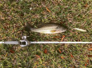 I love fishing with my New Shimano Antares !!!                               …