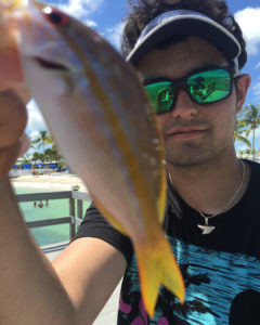 Monster yellow tail .                             …
