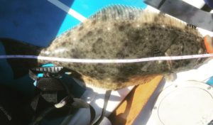 YEWWWWWEEEEE!!! Always rad to pull up a decent size flatty. They aren't biting a…