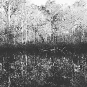 Beautiful Withlacoochee River