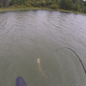 Musky Game Strong
