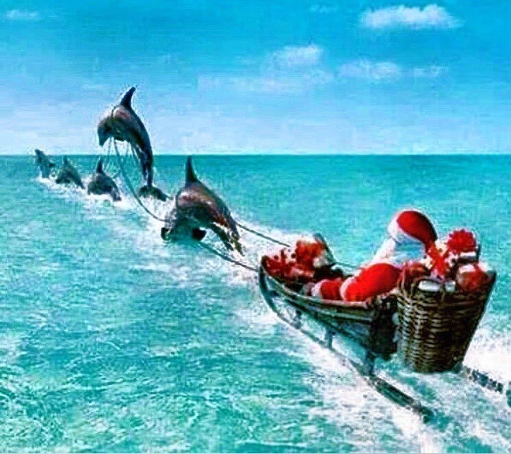 Christmas In Florida Keys.Merry Christmas From Ours To Your S From The Florida Keys