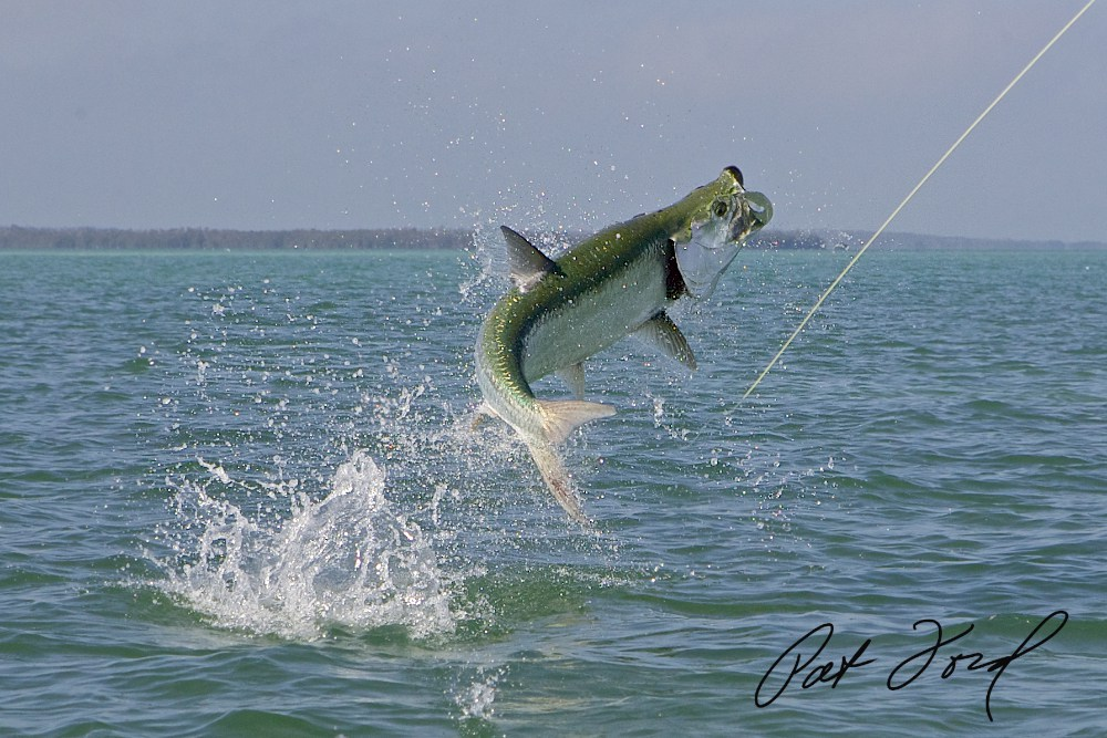 Tarpon Florida Fishing