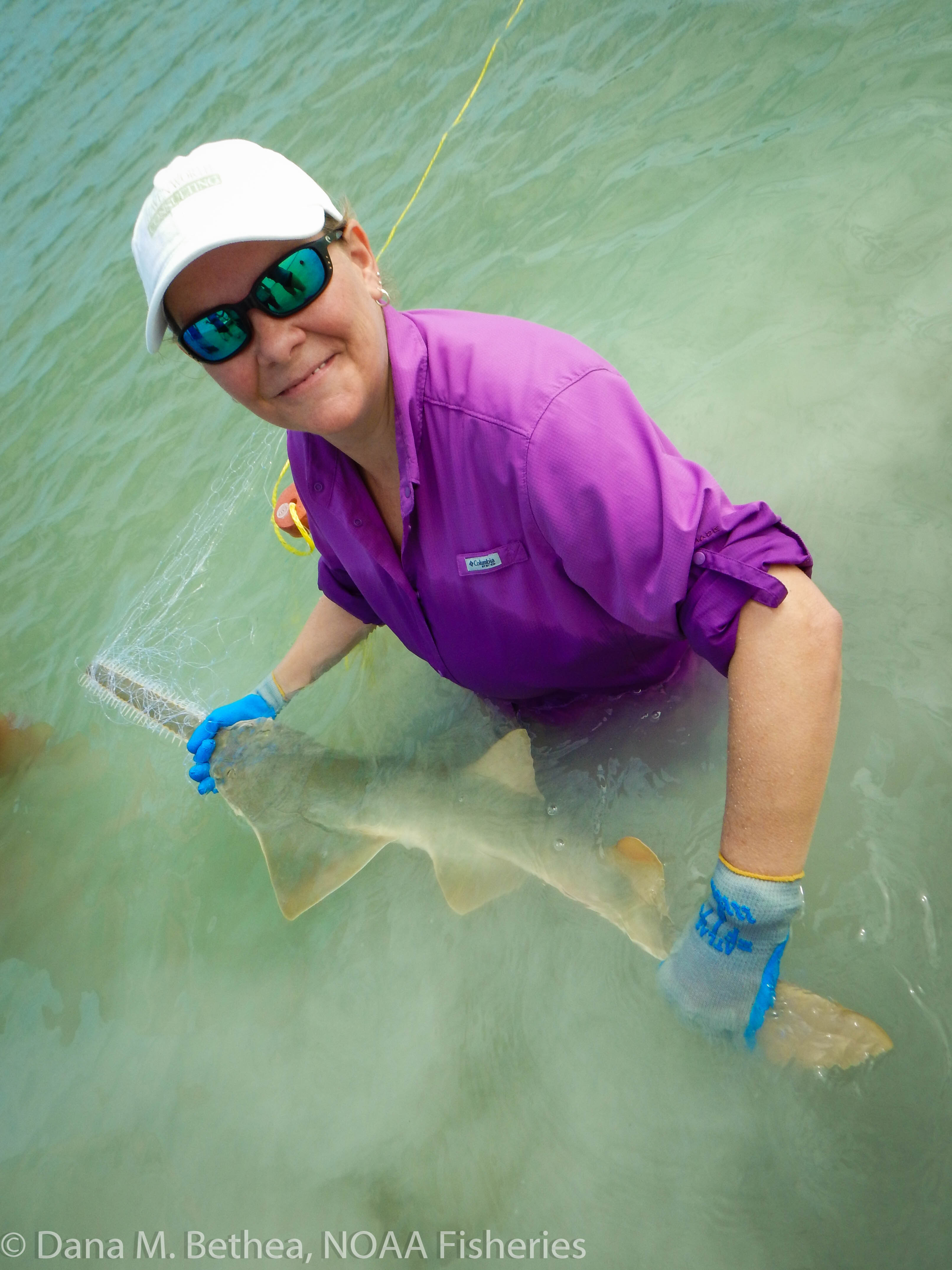 Sawfish: A Global Strategy for Conservation