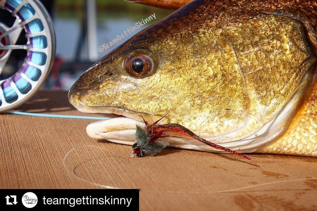 Redfish love SeaDek too!  ・ ・ ・ Nothing like catching slot redfish one 6wt! Fly...