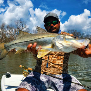 Unreal day in the Backcountry with  with over a dozen Snook and Reds to the Boat…