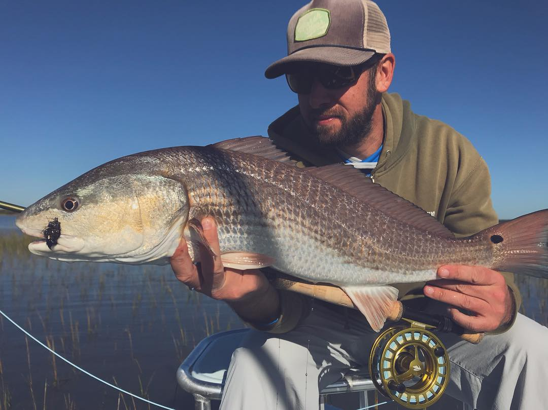 Lowcountry redfish