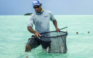 Had a great time last week working with the good folks   collecting bonefish for…