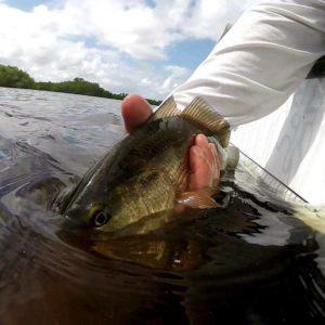 Here's  on a recent fishing trip. Niiiice catch! .  …