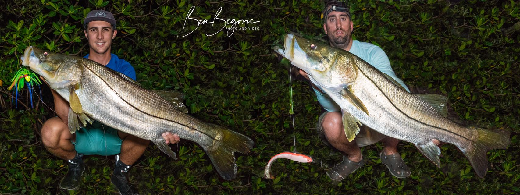 Monster Snook Fishing in Florida, Begovic Style.