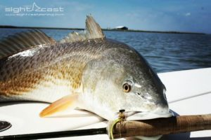 Redfish just wanna fly fish too! . . . . .  …