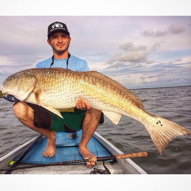 "AMAZING 50"" Redfish"